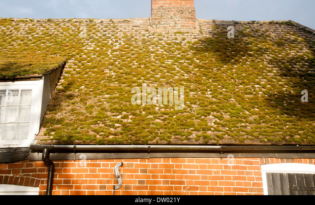 how to keep moss from growing on roof