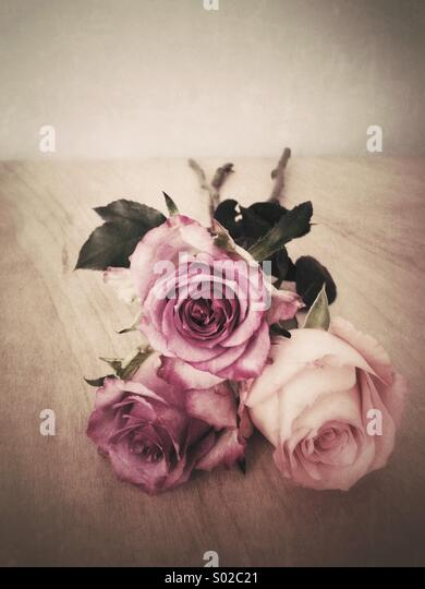 Three roses - Stock Image