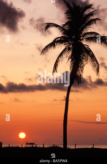 Palm tree on beach, Miami, Florida - Stock Image
