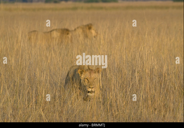 Vumbura Stock Photos & Vumbura Stock Images - Alamy