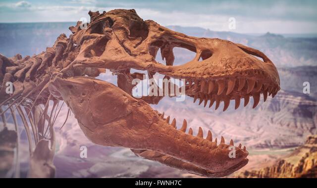 Tyrannosaurus Canyon Tyrannosaurus Rex Stoc...