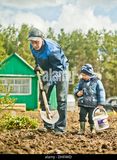Father and toddler son digging allotment garden - Stock Image