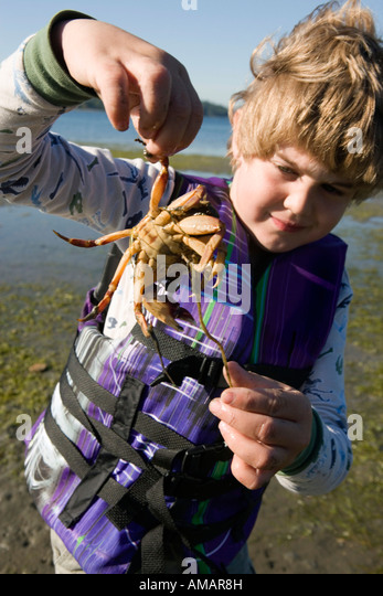 A young boy holding a crab on the beach - Stock-Bilder