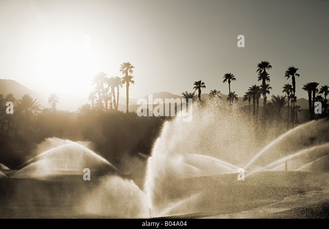 Sprinklers and palm trees - Stock Image