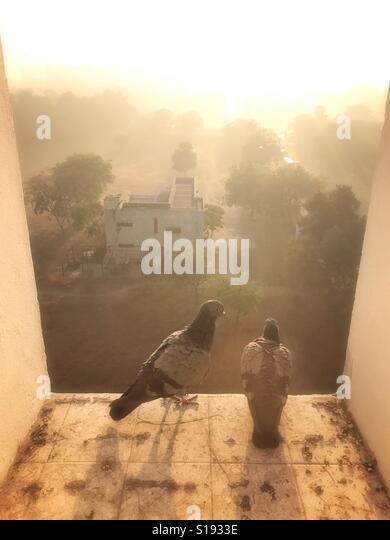 Feral pigeons on window ledge at sunrise - Stock-Bilder
