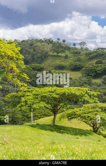 DOMINICAN REPUBLIC - Landscape in mountains, private land for grazing, northern DR, on Route 21. - Stock Image