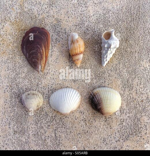 Shells on concrete - Stock Image