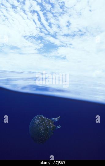 split image of sky and jellyfish at Bikini Atoll - Stock Image
