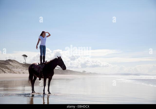Horse rider standing on horse, Pakiri Beach, Auckland, New Zealand - Stock-Bilder