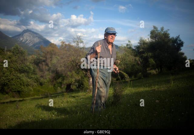 Diego Sanchez, a small farmer, looks for wild asparagus in a prairie in Prado del Rey, Cadiz, Andalusia, Spain, - Stock Image