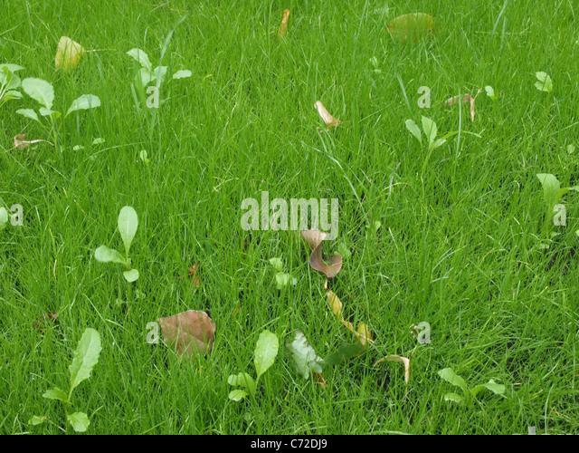 beautiful leafs - Stock-Bilder