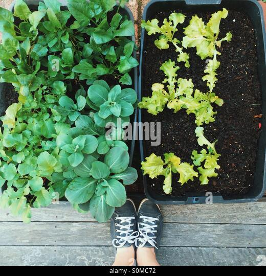 Urban container gardening - Stock Image