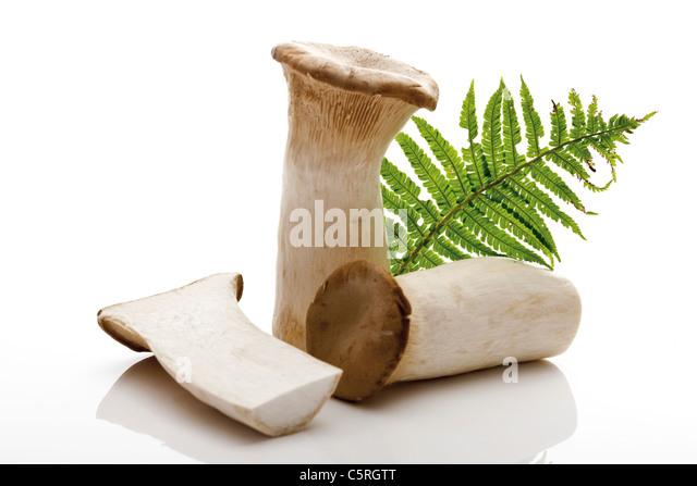 Sliced King trumpet mushrooms (Pleurotus eryngii) - Stock Image