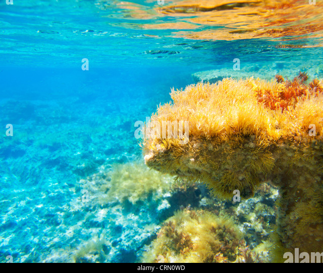 Ibiza Formentera underwater anemone seascape in golden and turquoise - Stock Image