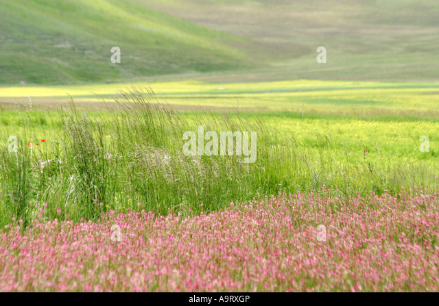 A wonderful display of poppies and many other  wildflowers cover the Piano Grande in the Sibillini National Park,Le - Stock Image