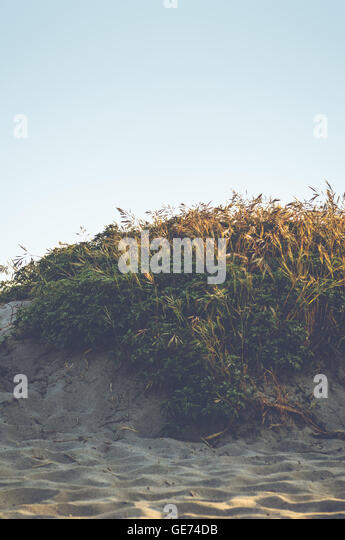 Landscape photograph of a sandy beach with grass and green plants. - Stock Image