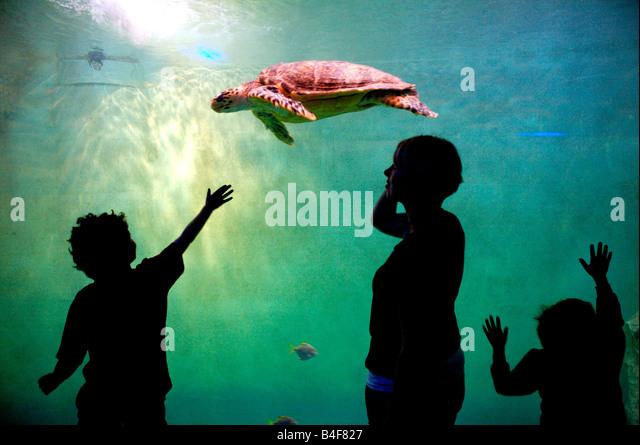 Children watching a turtle swimming in an Aquarium, France - Stock-Bilder