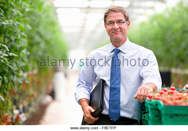Portrait confident businessman at crate of ripe tomatoes in greenhouse - Stock Image