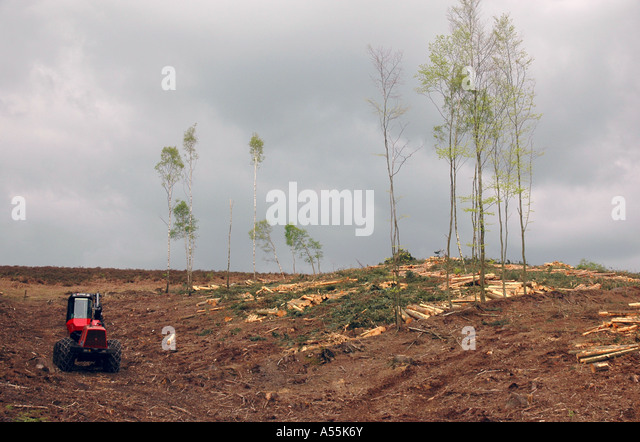 Deforestation forest management in the New Forest, England, UK - Stock Image