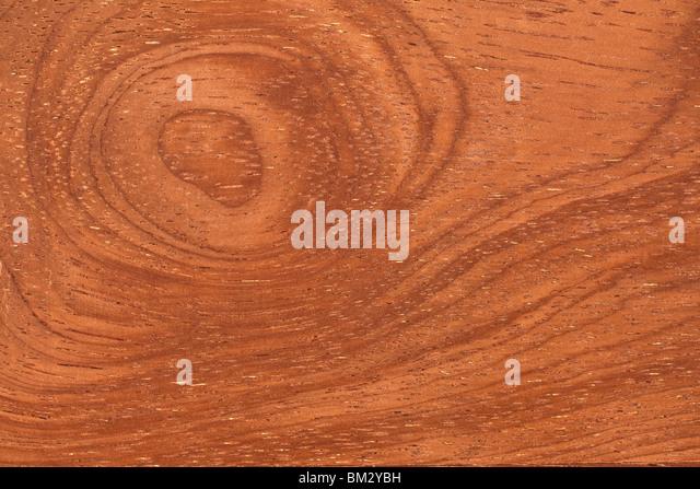texture of tropical wood - Stock-Bilder