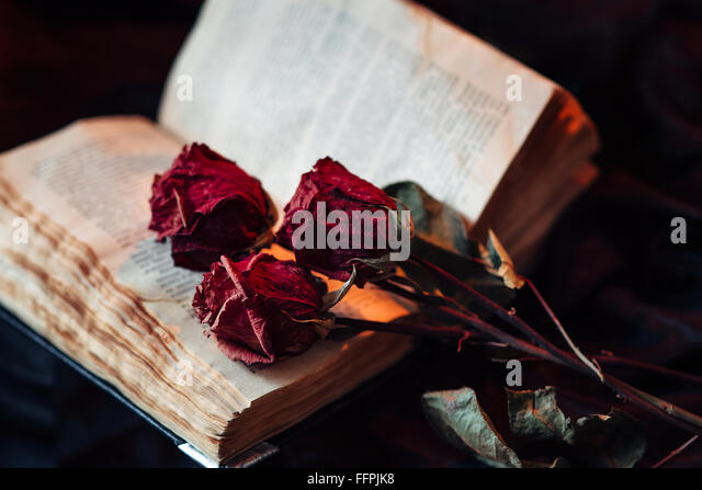 Still life with old book and roses - Stock Image