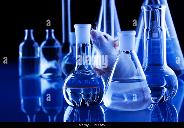 animal tests - Stock-Bilder