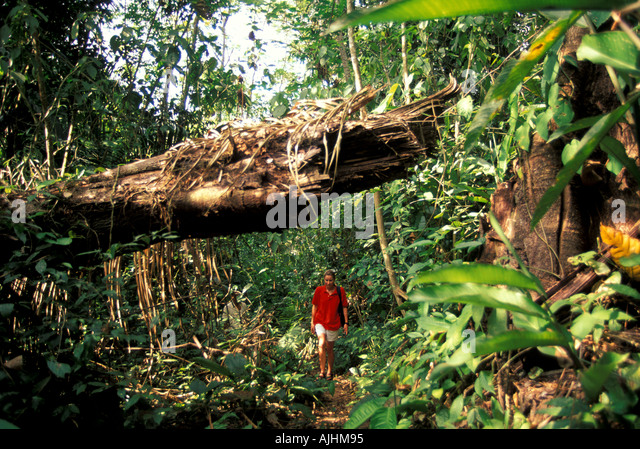 Belize woman hiking walking rain forest Cockscomb Basin Jaguar Preserve - Stock Image