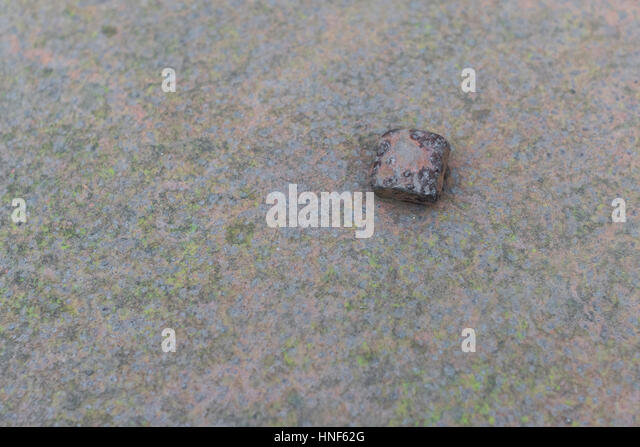 Rusty metal bolt holding together some steel / iron sheeting. - Stock Image