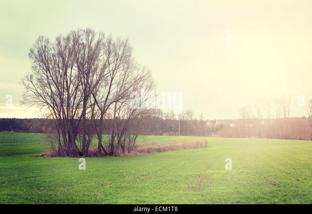 Sunset over field, vintage retro style nature background. - Stock Image