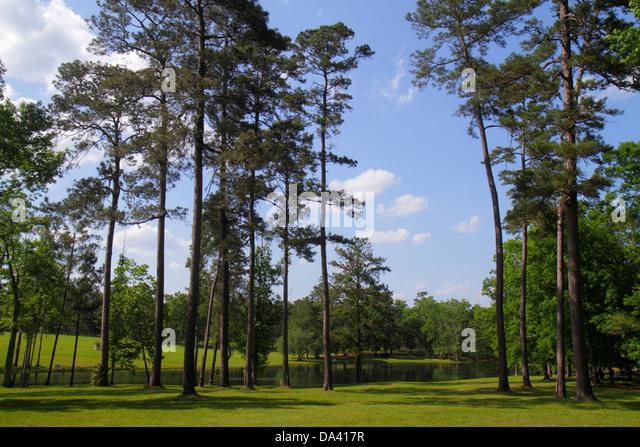 Georgia Thomasville Pebble Hill Plantation sporting country estate pond pine trees scenery - Stock Image