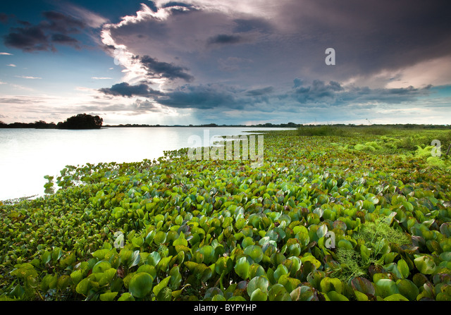 At the lakeside of Refugio de vida Silvestre Cienaga de las Macanas Nature Reserve, in Herrera province, Republic - Stock Image