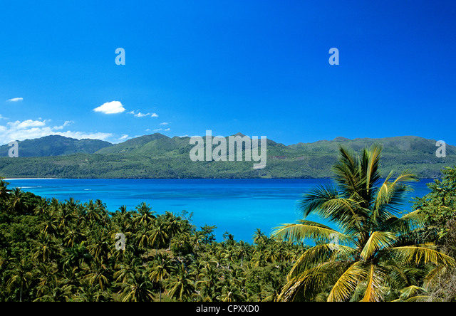 Dominican Republic, Samana province, playa El Rincon, coconut plantation - Stock Image