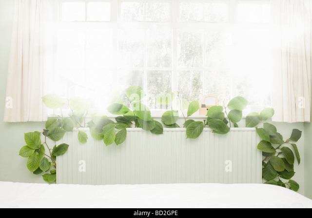 Radiator sprouting green vegetation - Stock Image
