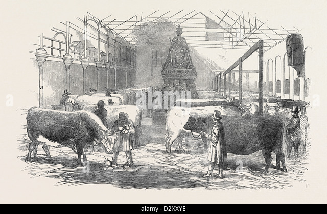 THE SMITHFIELD CLUB CATTLE SHOW-YARD - Stock Image
