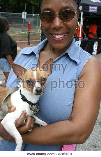 Coconut Grove Florida Grand Avenue Bahamas Goombay Festival Black woman pet dog Chihuahua - Stock Image