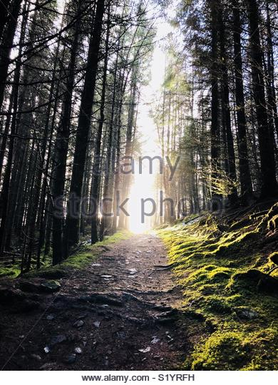 Sun and forest. - Stock Image