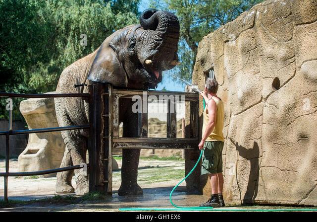 Kito stock photos kito stock images alamy for Designhotel elephant prague 1 czech republic