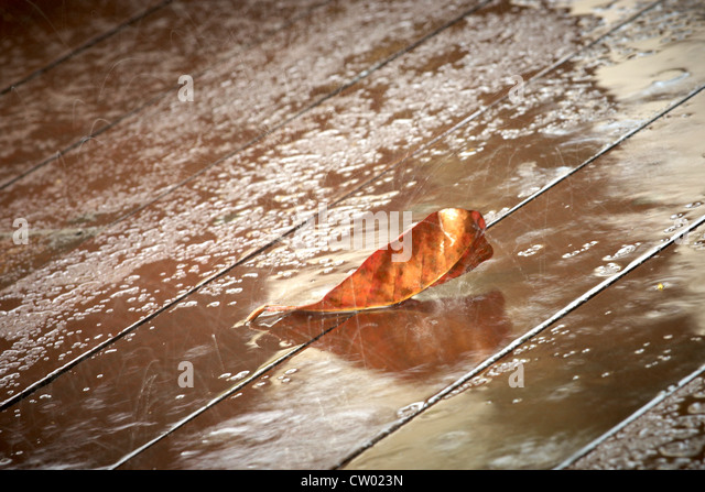 a falling leaf in the rain - Stock Image