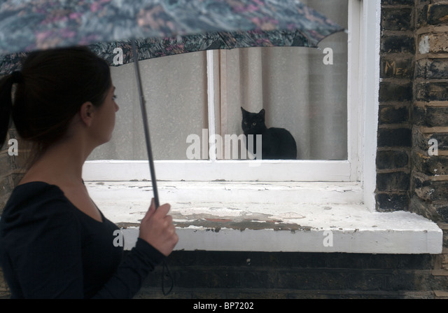 cat in the rain woman Everything you ever wanted to know about the characters in cat in the rain,  written by  no, we're not forgetful we simply never learn this woman's name.