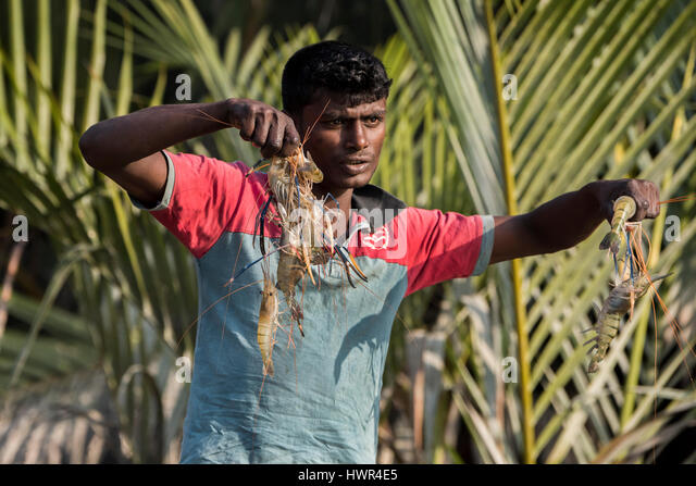 Bangladesh, The Sundarbans, Sundarbans National Park. Waterways between Harbaria and Charaputia. Typical prawn (chingri) - Stock-Bilder