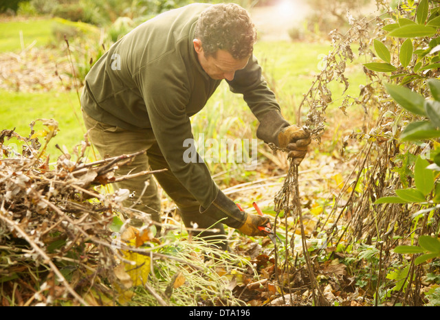 Gardener Cutting Weeds - Stock Image