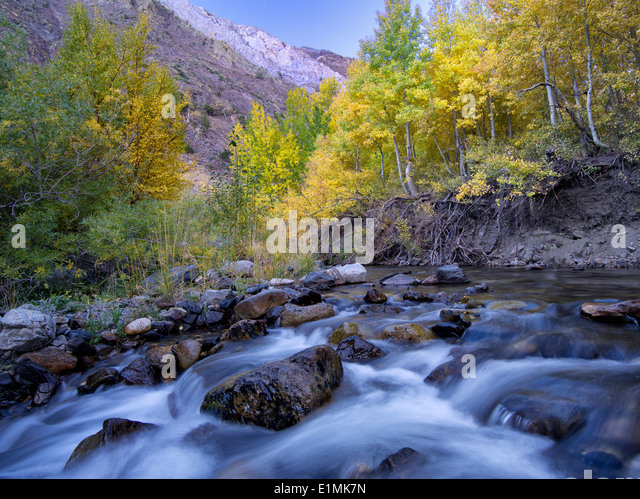 Mcgee Creek and fall colored aspens, Inyo National Forest, Eastern Sierra Nevada mountains, California - Stock Image