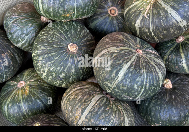 Hrvested 'Kabocha' squash  'Cucurbita maxima' or Moschata, also known as Japanese Pumpkin, San Joaquin - Stock Image