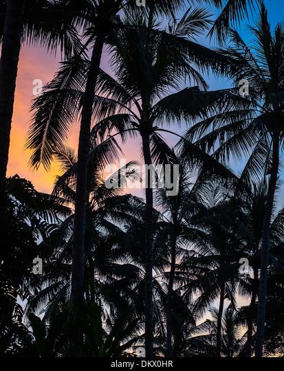 Palm Trees, Kuta Beach Bali Indonesia - Stock-Bilder