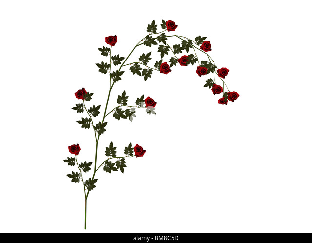 Illustration of a red rose - Stock Image