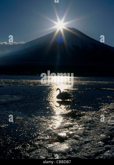 Diamond Fuji and a Swan on Lake Yamanaka, Yamanakako, Yamanashi, Japan - Stock Image