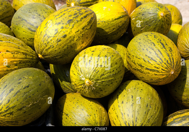 Crhistmas melon or Santa Claus Piel de Sapo fruit - Stock Image