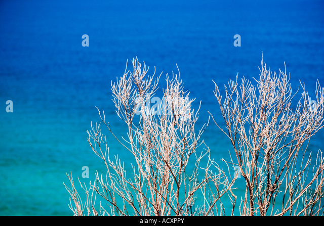 Coastal plant life near sea West Cape Western Province South Africa - Stock Image