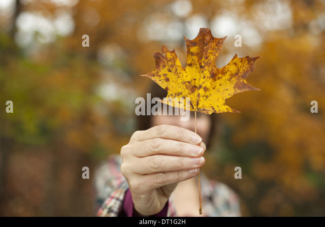 Woodland in autumn A woman holding an autumnal leaf a maple leaf in her hand - Stock Image