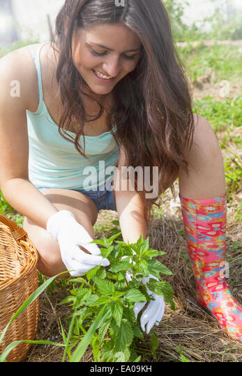 Young woman tending to plant - Stock Image